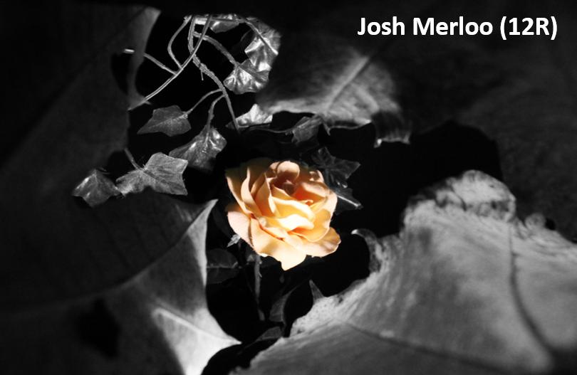 John meerloo resize
